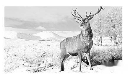 野生動物環保標語